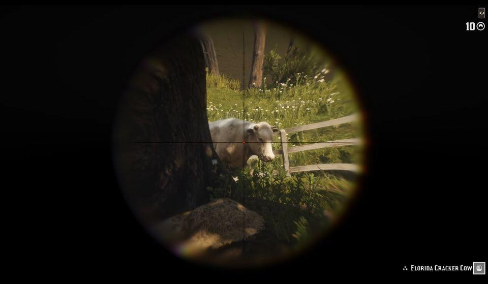 cracker_cow_tries_to_hide.jpg